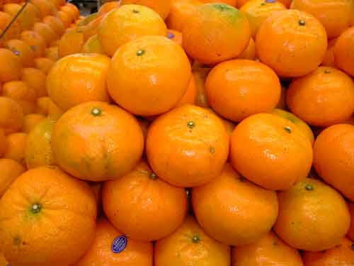 ORANGE VARIETIES and KUMQUAT